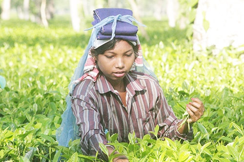 Euroasia Industry Magazine article : TITANS OF TEA