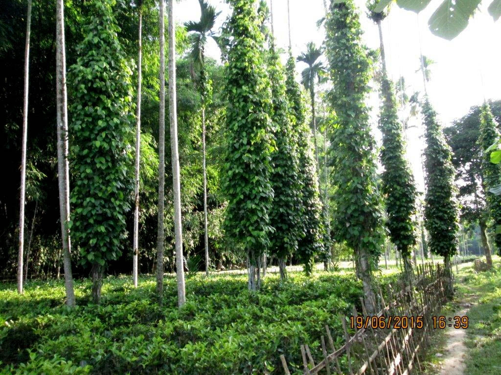 Training Programmes for Tea Growers