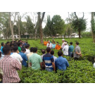Training program for small tea growers for PPC compliance & food safety