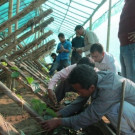 Pepper Nursery training programme to farmers at Umsur village