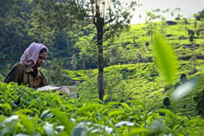 New partnership between Unicef & ETP to help children living in Tea gardens